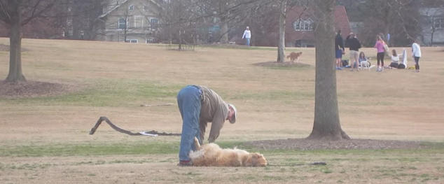 Viral Video: Lazy Dog Doesn't Want to Leave Dog Park