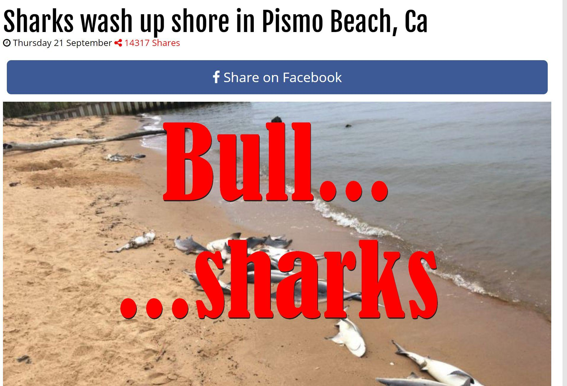 Fake News: Sharks Did NOT Wash Up On Shore In Pismo Beach, Ca