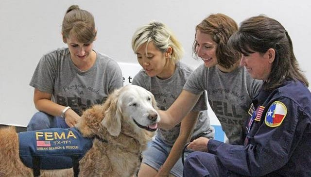 Video: Last Surviving 9/11 Rescue Dog Honored On 14th Anniversary