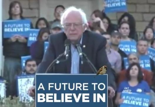 Watch LIVE Stream: Bernie Sanders Speaks At Monterey, California Rally, May 31