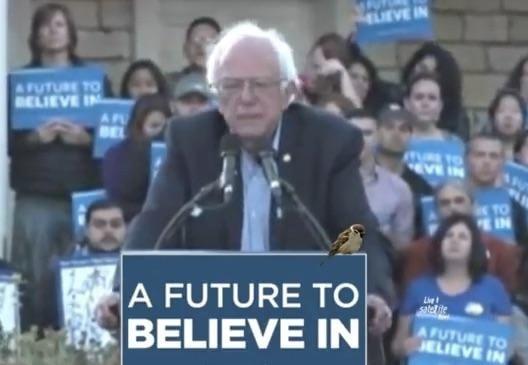 Watch LIVE Stream: Bernie Sanders Speaks At Monterey, California Rally, May 31