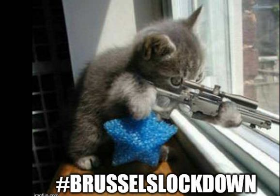 Belgians Deal With Terror Lockdown: 'They haven't got a chance! We haz kittens!'