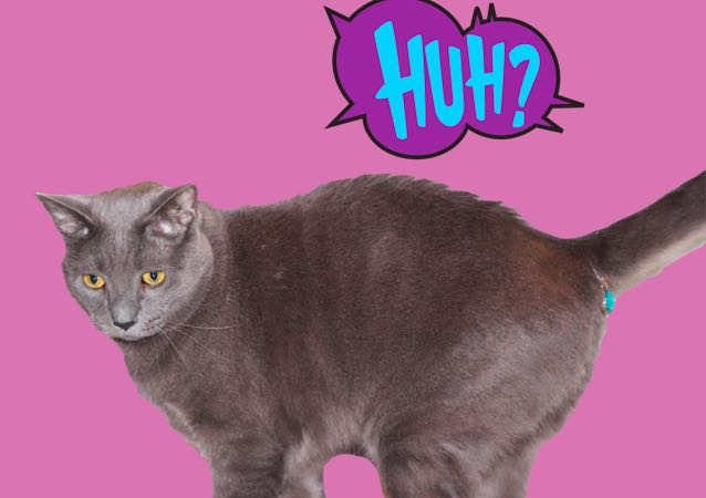 Trendolizer Pick: A 'Butt Cover' For Your Cat