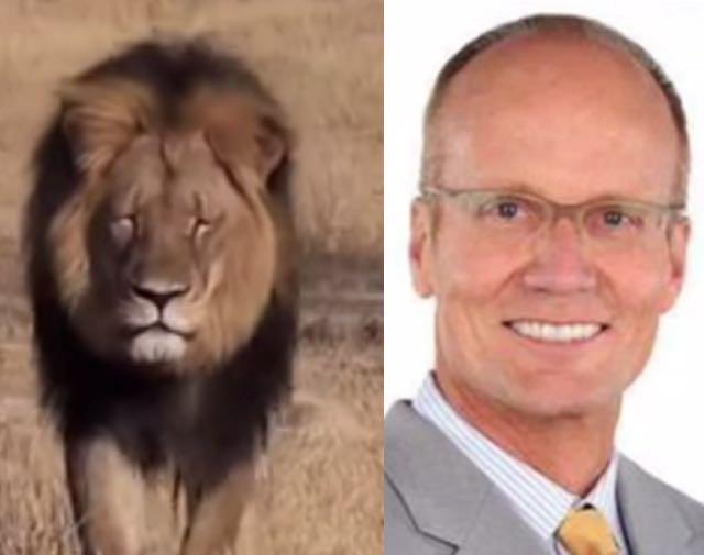 Dentist Who Killed Cecil The Lion Demonized