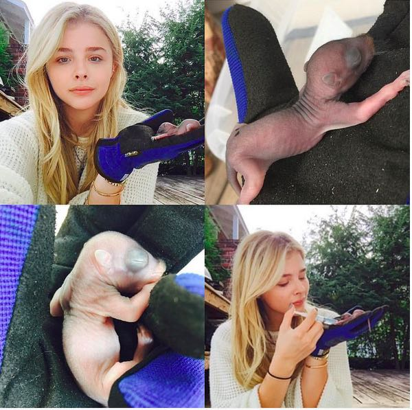'Kick-Ass' Actress Chloe Grace Moretz Becomes A Mom -- To 3 Baby Squirrels