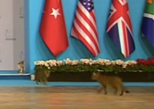 Trending Video: Cats Bypass Presidential Security, Storm G20 Stage In Turkey