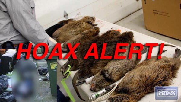 Hoax: Plague Of Giant Rats NOT Sweeping NY City As 4 Homeless Men NOT Found Eaten Alive