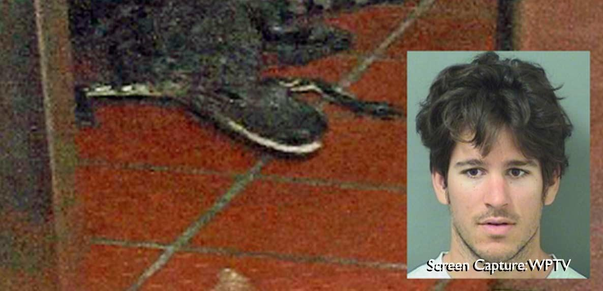Say What? Man Allegedly Hurls Gator Through Drive-Thru Window