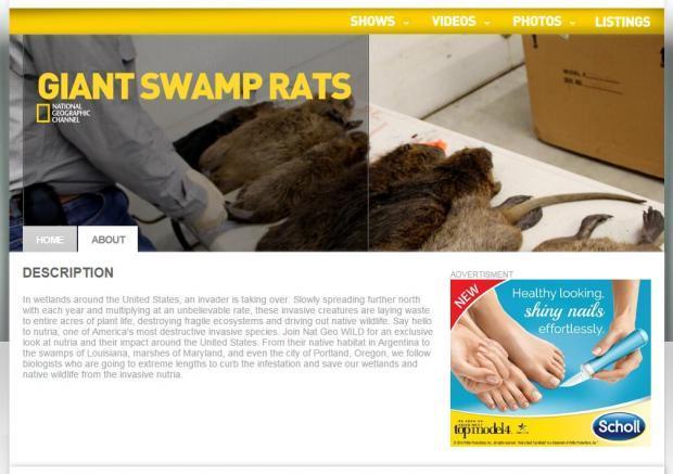 giant-swamp-rats.JPG