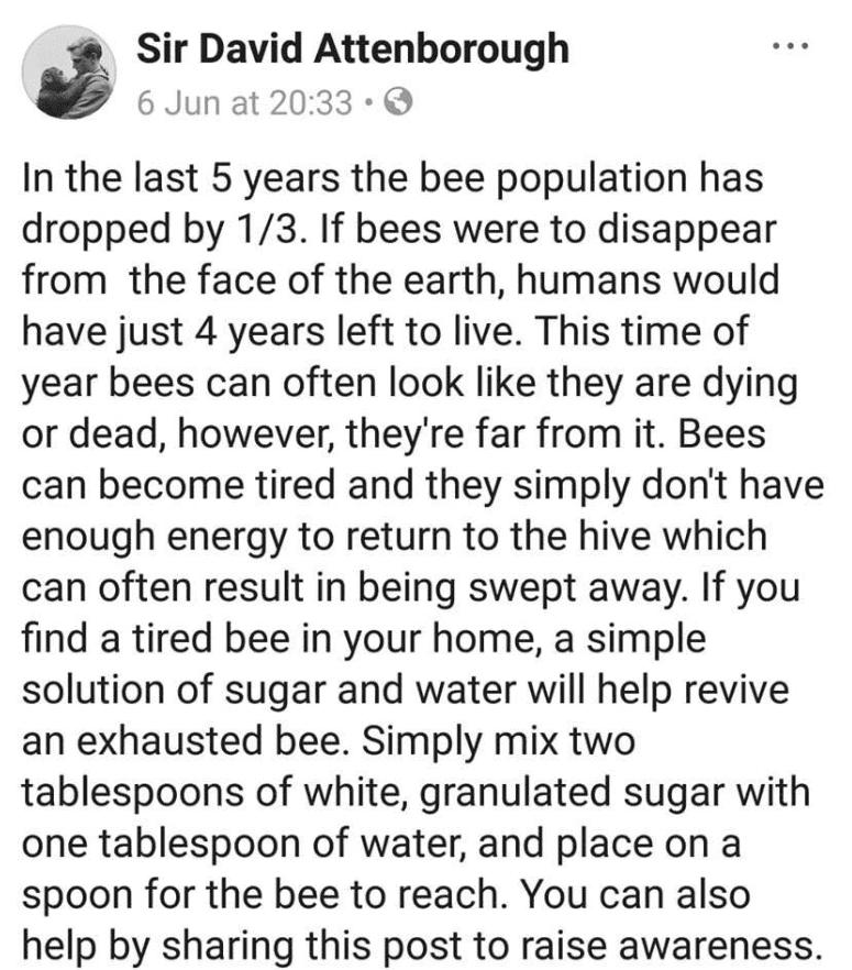 fake-bees.png
