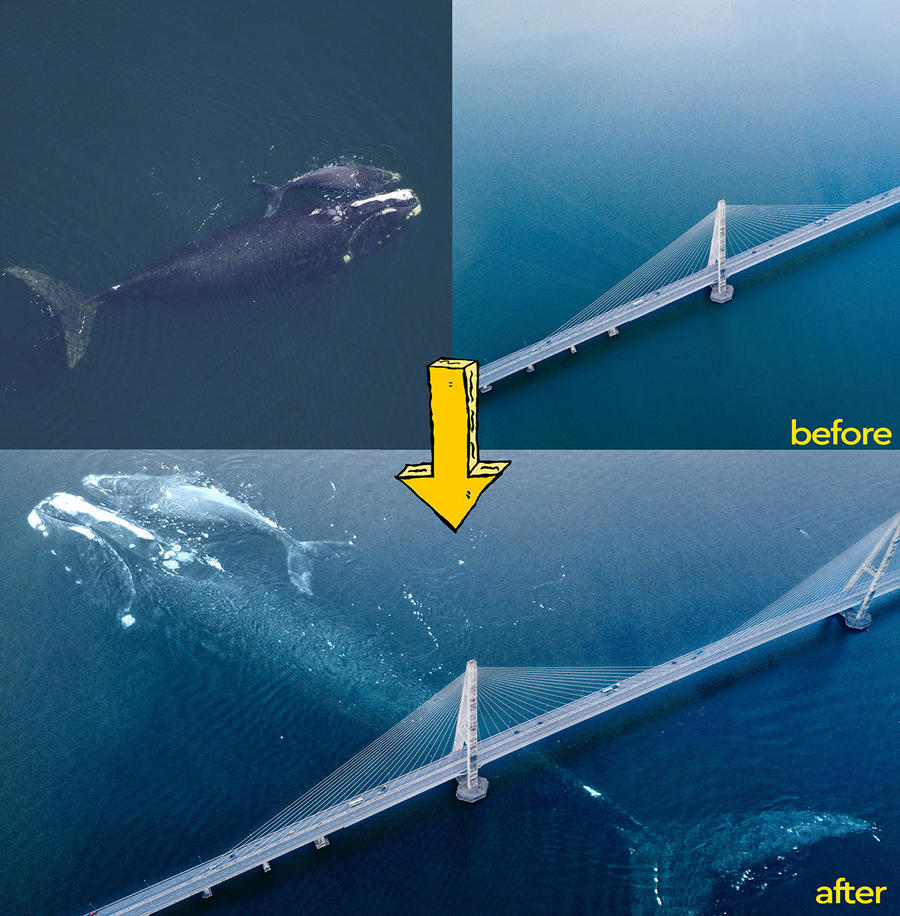 blue whale explanation.jpg