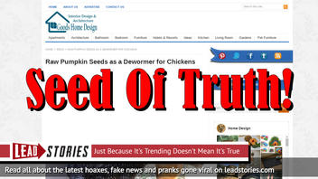 Fake News: Raw Pumpkin Seeds NOT PROVEN As A De-Wormer For Chickens