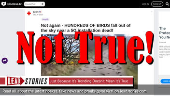 Fake News: Hundreds Of Birds That Fell Out Of The Sky Were NOT Near A 5G Installation
