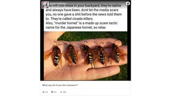 Fact Check: 'Murder Hornets' Are NOT The Same As Cicada-Killer Wasps And Are NOT Native To The US