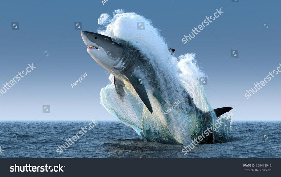 stock-photo-shark-jumps-out-of-the-water-369478949.jpg