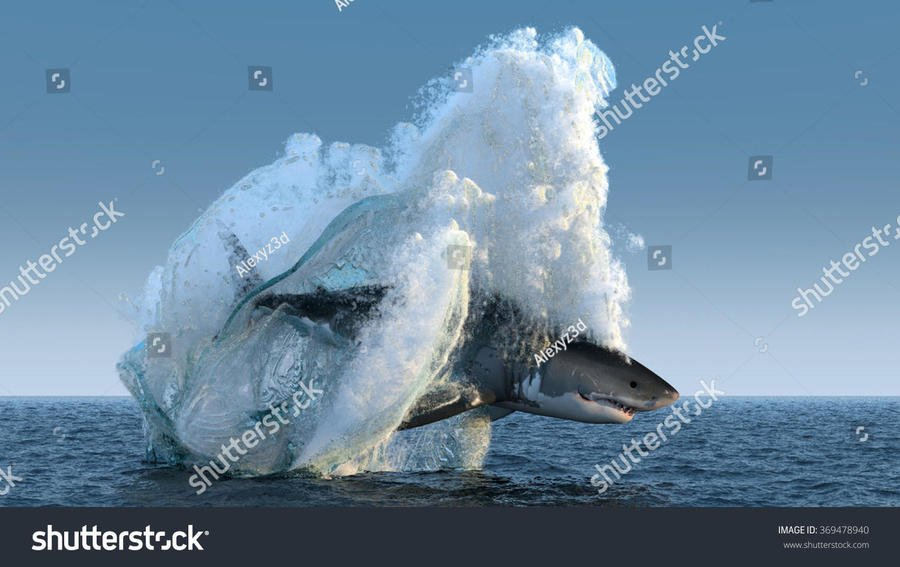 stock-photo-shark-jumps-out-of-the-water-369478940-1.jpg