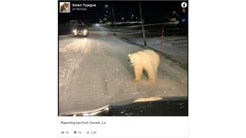 Fact Check: Photo Does NOT Show A Polar Bear Roaming The Streets Of A US Neighborhood: It's in Norway