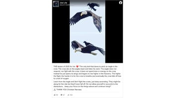 Fact Check: The Crow Is NOT The Only Bird That Dares To Peck An Eagle