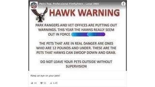 Fact Check: Hawks CANNOT Carry A 12-Pound Pet