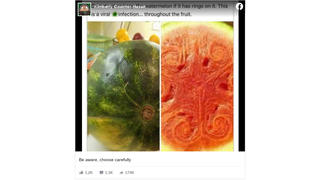 Fact Check: Watermelon With Ringed Markings Is NOT Dangerous To Eat