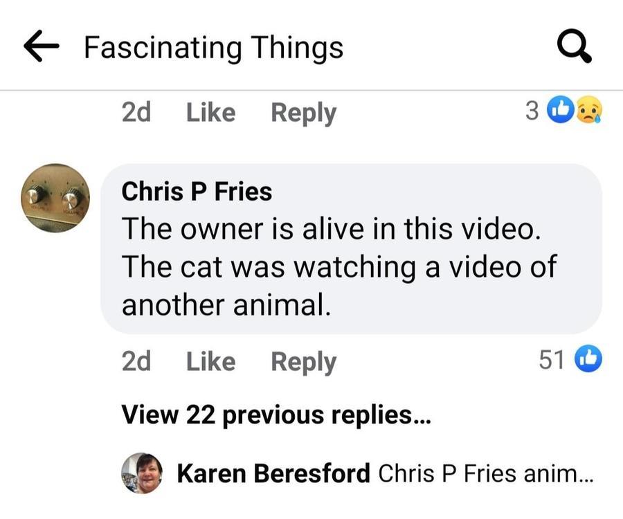 cat screenshot 1.jpg