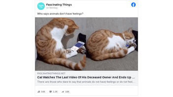 Fact Check: Cat Did NOT Watch Video of Supposedly Deceased Owner