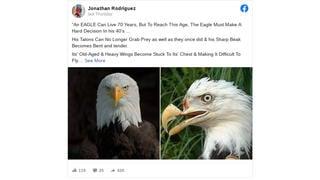 Fact Check: Eagles Do NOT Live To 70, Break Own Beaks, Pluck Selves Naked