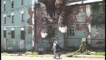 Fact Check: Image Of Giant Kittens Napping Is NOT A Mural -- It's Digital Art