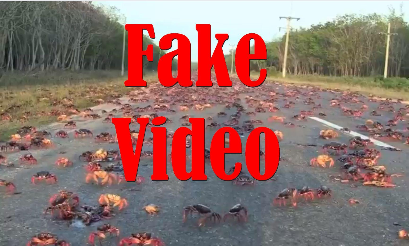 Fake Video: Crabs NOT Crossing Road In Florida After Hurricane Irma