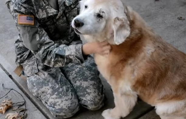Cute Vid: Old Dog Cries With Joy as Soldier Returns Home
