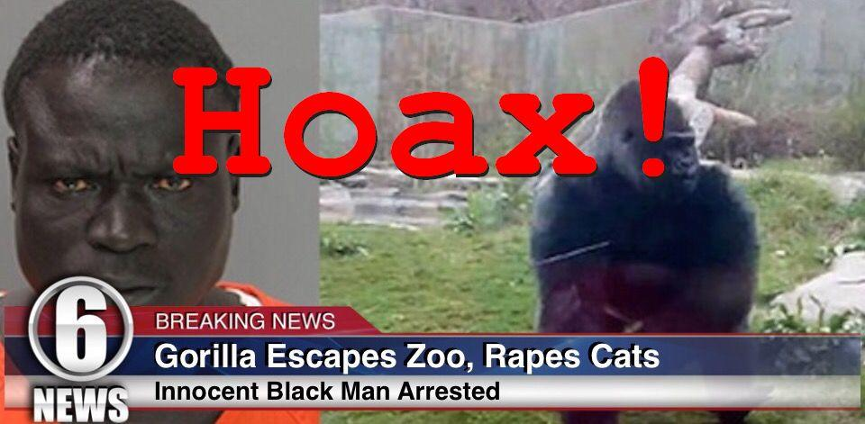 Gorilla DID NOT Escape Zoo, Rape Neighborhood Cats - NO Innocent Black Man Arrested