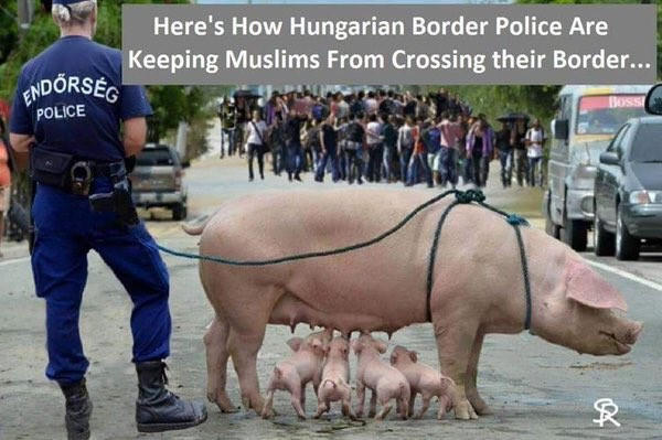 Fake News: Hungarian Border Police NOT Keeping Muslims From Crossing Border Using Pigs
