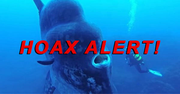 Hoax Alert: National Geographic Cameraman WAS NOT Eaten Alive During Shooting
