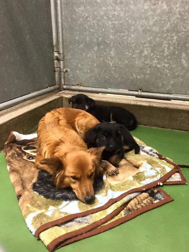 Momma Dog Breaks Out of Kennel to Comfort Scared Puppies