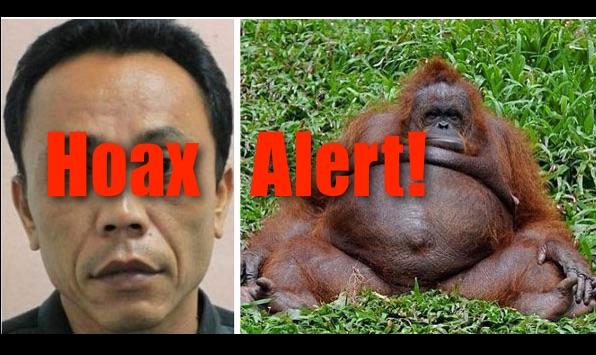 Hoax Alert: Indonesian Zookeeper WAS NOT Accused Of Impregnating Female Orangutan