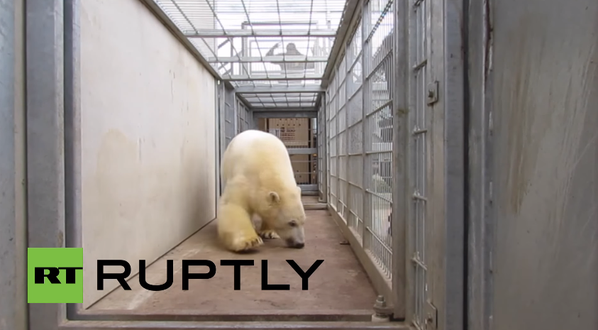 Confirmation: Video Of Immigrants Hiding In Truck With Polar Bear Is Real
