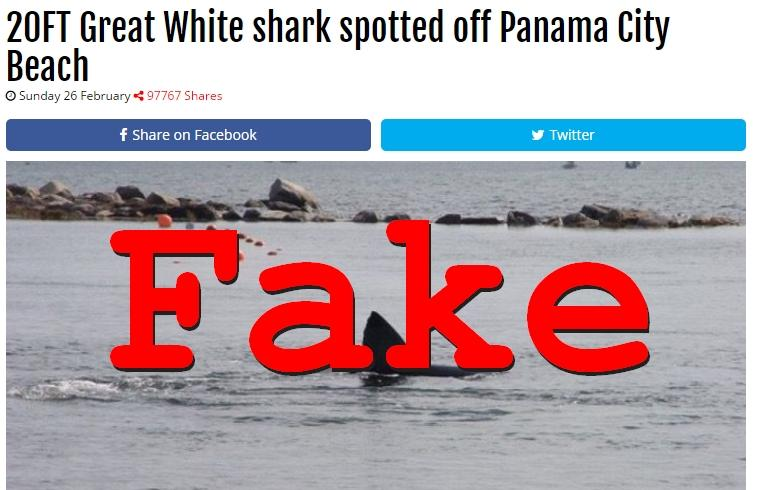 Fake News: NO 20FT Great White shark spotted off Panama City Beach