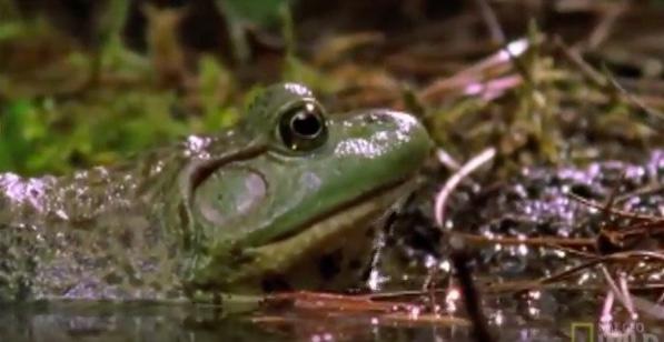 Epic 'Thug Life' Video: Bullfrog vs Newt