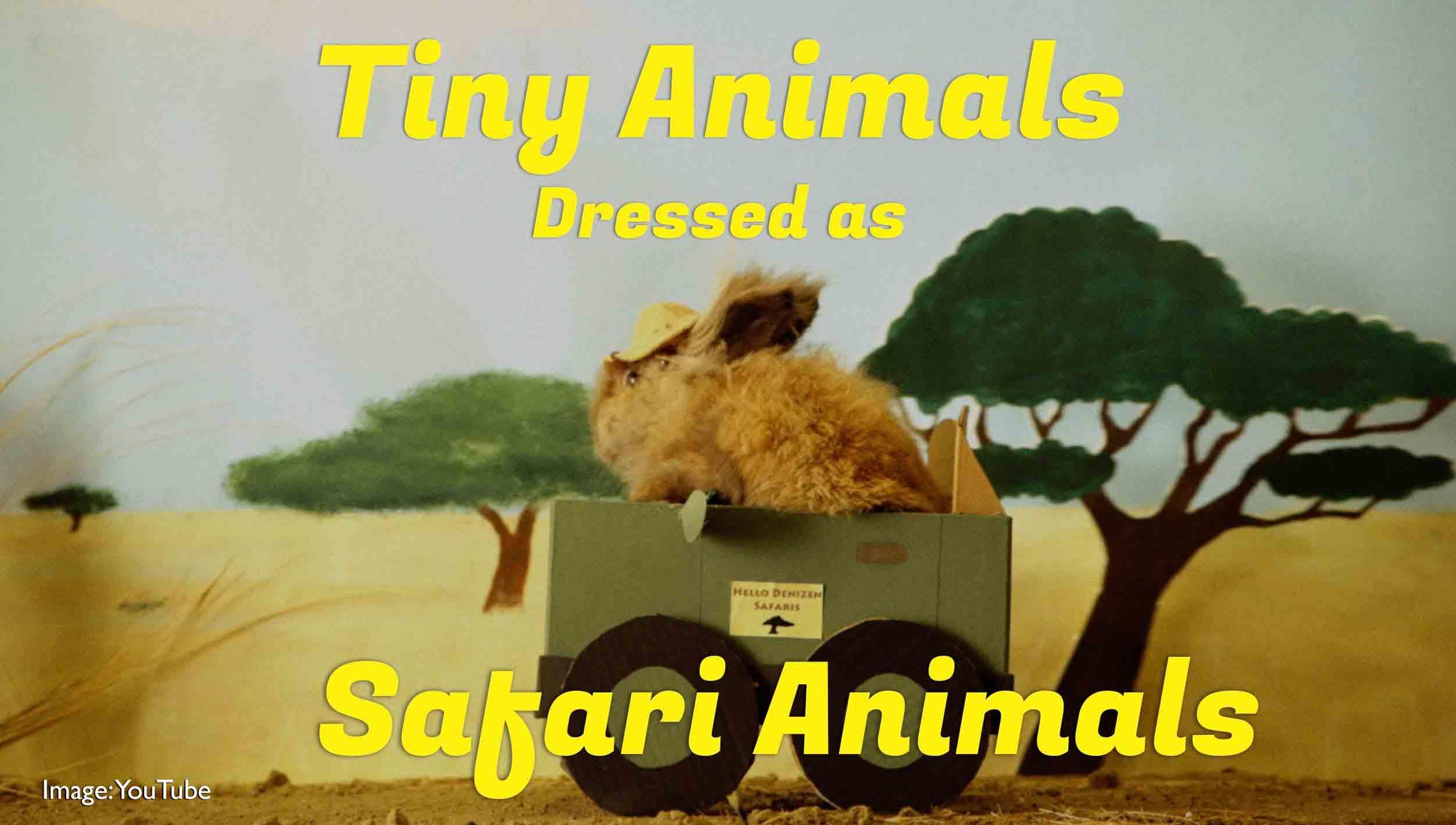 Cute Video: Tiny Animals Dressed As Safari Animals